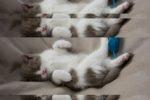 Ускорить загрузку сайта WordPress: a3 Lazy Load